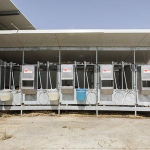 niche d'élevage / pour veaux / individuelle / en acier inoxydable