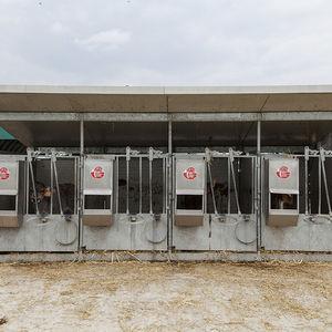 niche d'élevage / pour veaux / individuelle / en acier