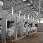 niche d'élevage / pour veaux / individuelle / d'intérieur
