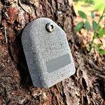 détecteur de mouvement d'arbre