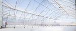 serre multi tunnel / de production / structure en acier / avec gouttière
