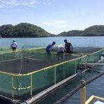 filet de pêche pour séparation de bassin / en polyéthylène