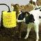 brosse d'élevageMini Calf Comfort BrushO'Donnell Engineering
