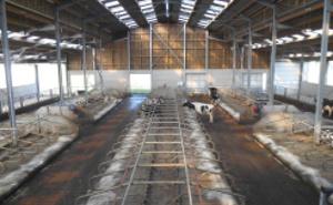 Livestock buildings and restraints