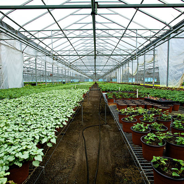 Greenhouse film / polyethylene / transparent - SUPER4 - AT Films Inc