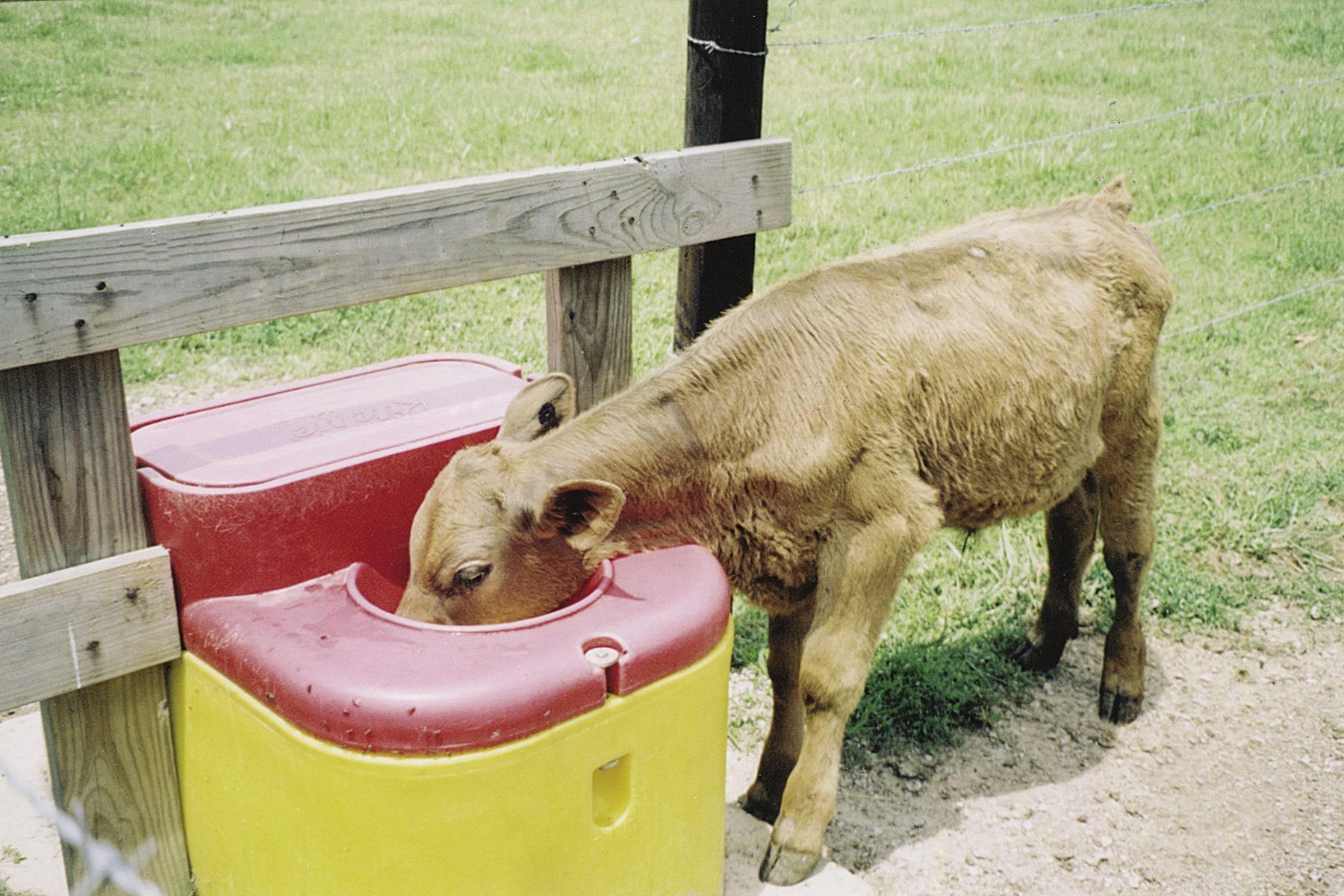 Cow waterer / trough / polyethylene / floor-mounted - 16299