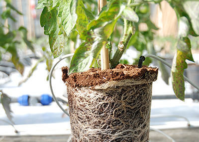 Potting Growing Media
