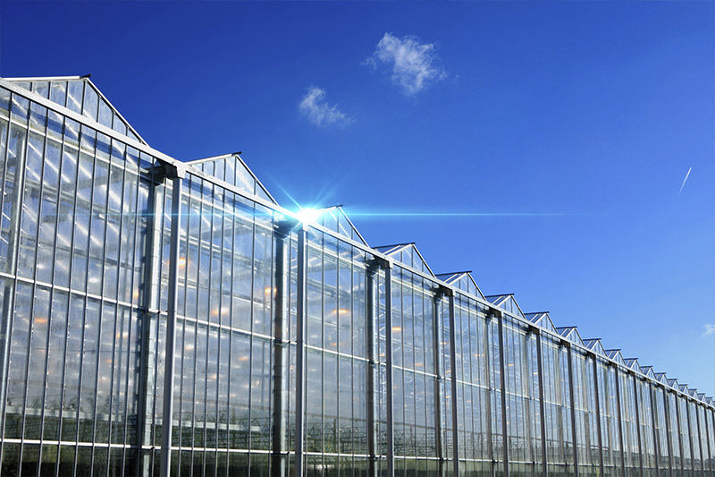 Venlo greenhouse / ornamentals production / gardening / glass Rough  Brothers Inc