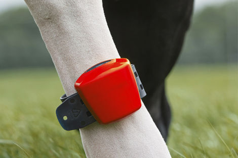 Cow monitoring system / health / heat / wireless - Pearson