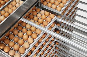 egg transfer system