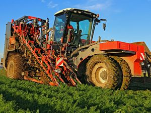 carrot harvester / beet / celeriac / parsnip