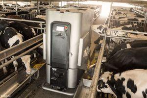 calf feeding robot