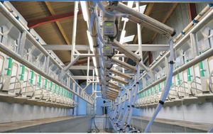 cow milking parlour / herringbone / swing-over / with feeding system