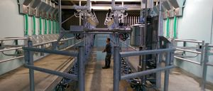 cow milking parlor / herringbone / double up / with feeding system
