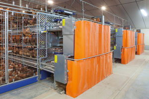 chicken rearing cage / stainless steel frame / with manure removal system / with automatic controls