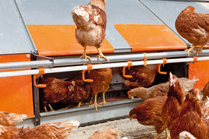 layer aviary system / with manure removal system / sloped floor