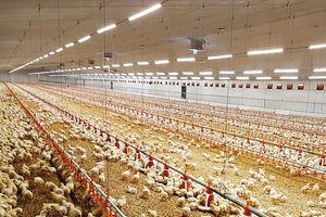 light for livestock buildings / LED / for poultry