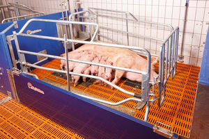 farrowing stall