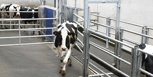 cow sorting gate / automated