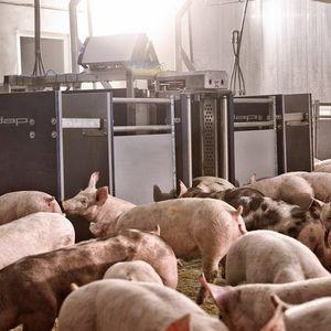 pig sorting gate