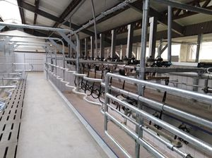 cow milking parlour / parallel / swing-over