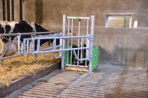 calf maternity cage