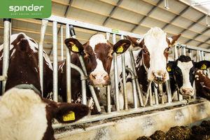 cows headlock / self-locking