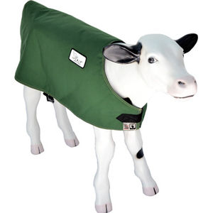 calf blanket