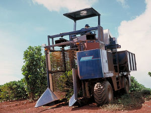 coffee harvester / self-propelled / single-row