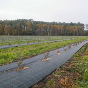 above-ground plastic mulch