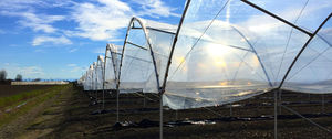 multi span greenhouse / commercial production / plastic