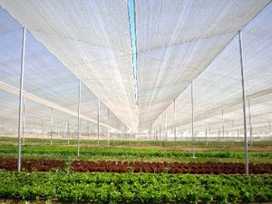 hail net / wind protection