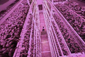 plant growth farming system / germination / vertical