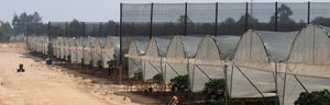 wind protection netting