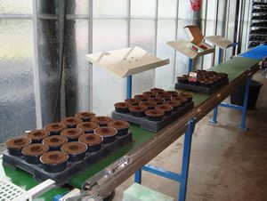 tray transplanting machine / for pots / automatic