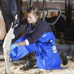 milking apron