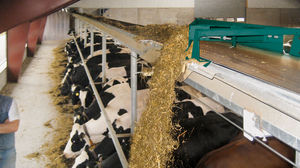 cow feeding equipement