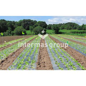 soil cover film / UV-resistant / perforated / biodegradable