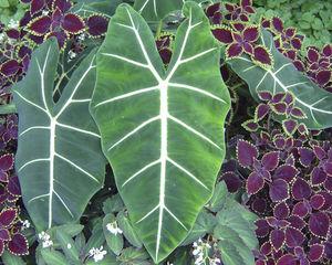 perennial green plant