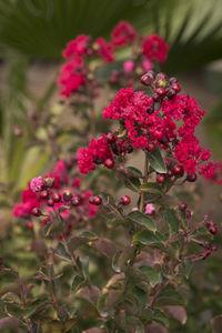 flower bed flowering shrub