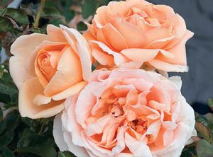 orange floral plants