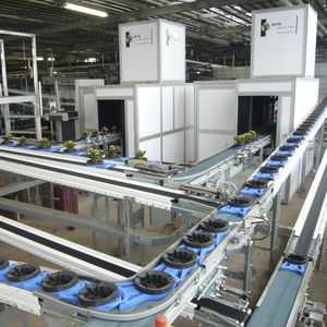 potted plant sorting machine / optical / automatic
