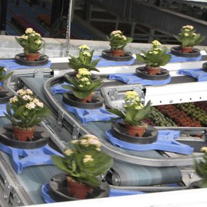 plant phenotyping robot / for greenhouse / automated