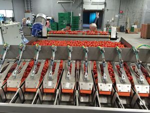 packaging horticulture production line / automatic