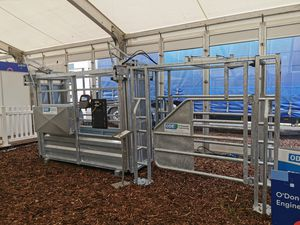 cow sorting gate / with weight detection