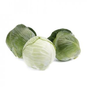 autumn cabbage seeds / hybrid