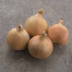 early onion seeds