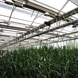 greenhouse lighting system / blue / red