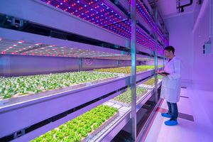 vertical growth system lighting system