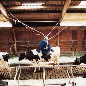 livestock comfort brush / stationary / cows / horizontal
